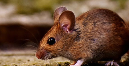 anti nuisible par ultrasons pour lutter contre les souris et rongeurs